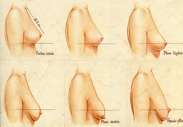 taille idéal du seins